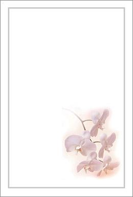 胡蝶蘭2枠付き