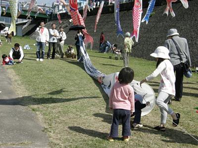 加茂川のこいのぼり