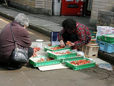 イチゴ農家の方