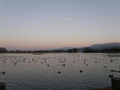 夕暮れの瓢湖