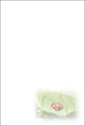 5.てんとう虫